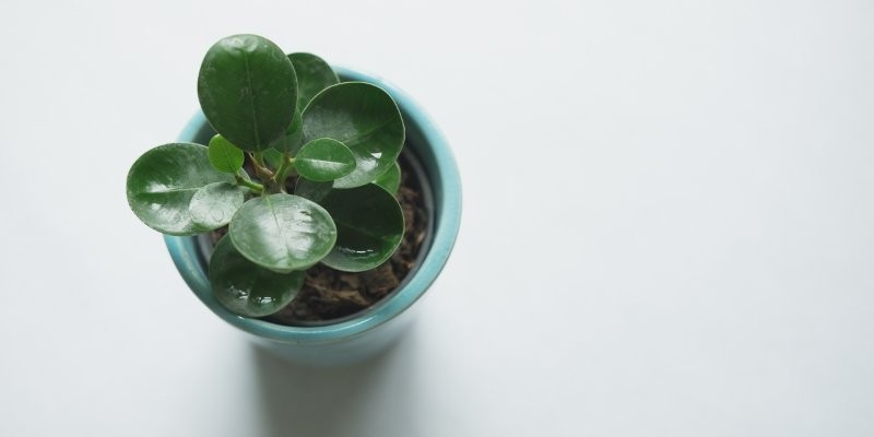 Green succulent plant in a teal blue pot viewed from above