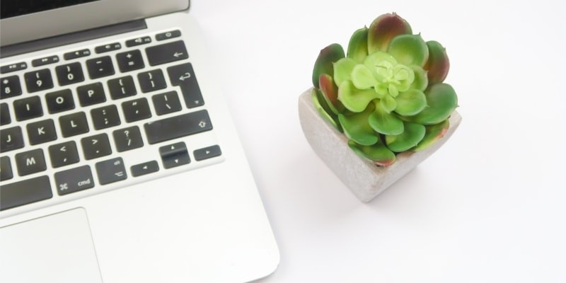 Laptop With Black Keyboard And Succulent Plant In White Pot